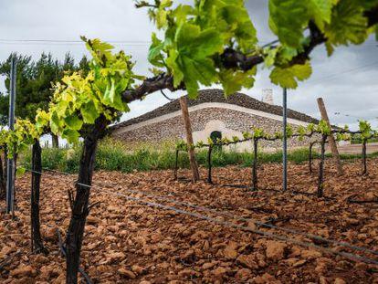 Tomelloso, en Ciudad Real, alberga la cooperativa vitivinícola más grande del mundo.