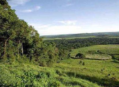 Paisaje de la reserva forestal de Mabira, a 55 kilómetros de Kampala (Uganda).