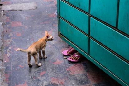 La trabajadora sexual Kulsum juega con su gato en el burdel de Kandapara de Tangail.