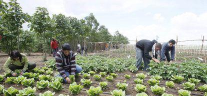 Jornaleros cultivan un huerto en la finca pública Somontes de Palma del Río (Córdoba).