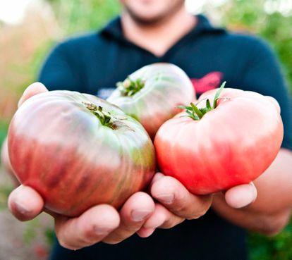Tomates de Huerta de Carabaña recién recogidos.