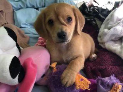 El cachorro fue rescatado de la calle por el centro canino Mac s Mission de Misuri, Estados Unidos
