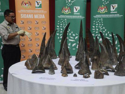 Un funcionario observa varios cuernos de rinoceronte incautadas en Kuala Lumpur este lunes.