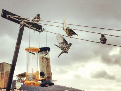 Aves en un comedero en Barcelona.