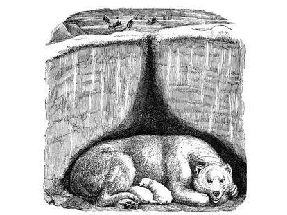 Ilustración de la madeiguera del oso, del libro 'Animales arquitectos', del finlandés Juhani Pallasmaa, recién traducidoo al castellano.