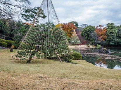 Árboles protegidos con la técnica de Yukitsuri en Tokio. |