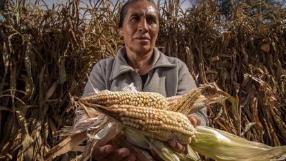 Una agricultora muestra su cosecha de maíz en Ciudad de México, en marzo pasado.