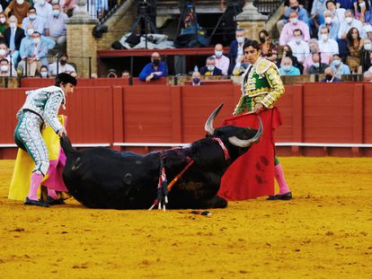 El quinto toro de la tarde, desplomado en plena faena de muleta.