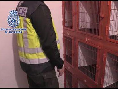 La policía intervino drogas y armas, además de cuatro gallos muertos y ocho heridos