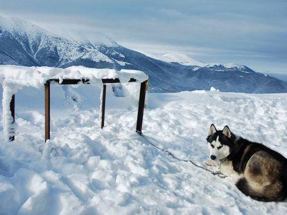 Un perro de la raza husky encadenado a un poste.
