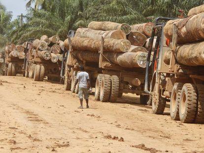 Camiones cargados de madera en Liberia.