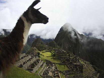 Una llama con en Machu Picchu al fondo. El popular camélido sudamericano podría ser un importante aliado para combatir el sida.