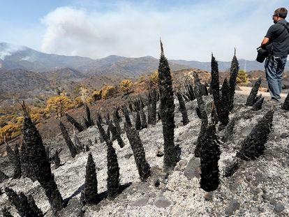 Parajes quemados por el incendio en Sierra Bermeja.