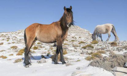 Dos caballos en una imagen de archivo.