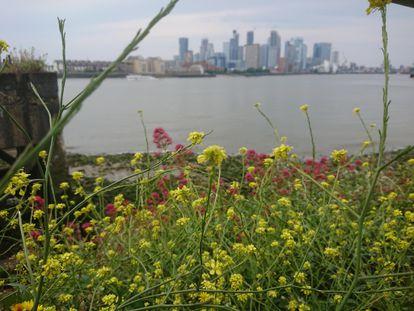 En la imagen, jaramagos (Diplotaxis virgata) y valeriana roja (Centranthus ruber), hierbas y que pueden albergar hasta 50 tipos de insectos.
