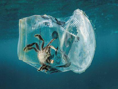 Un cangrejo atrapado en un vaso de plástico en Filipinas.