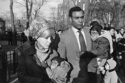 Garry Winogrand: 'Zoo de Central Park', Nueva York,1967.