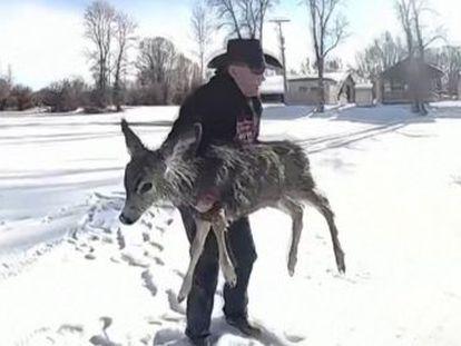 El ayudante del sheriff del condado de Sublette, en Estados Unidos, difundió en vídeo cómo logró sacar al animal con una cuerda