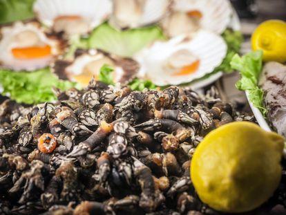 Un plato de percebes gallegos, uno de los productos que vuelven locos a los madrileños cuando visitan las Rias Baixas