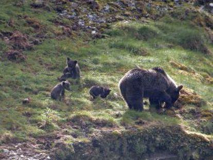 El hábitat, la mortandad, la caza, la comida o la fecundidad. Nadie sabe con certeza por qué la misma especie crece más en la parte occidental que en la oriental