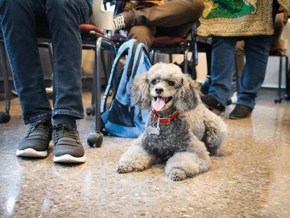 Un perro junto a su dueño en un aula de la costarricense Universidad Latinoamericana de Ciencia y Tecnología