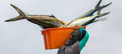 Un hombre carga con el atún que será vendido en la playa de La Poza, cerca del puerto de Manta (Ecuador).