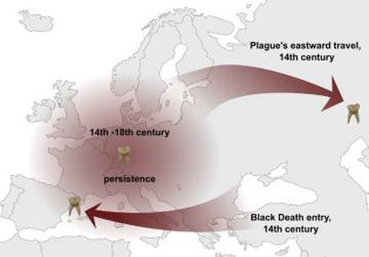 El mapa muestra la ruta seguida por la bacteria de la peste con su llegada desde el este y su regreso.