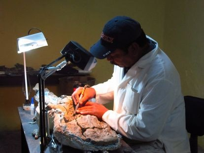 Researcher José López Espinoza cleans one of the skeletal remains in December 2013.