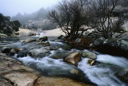 La Sierra de Guadarrama fue declarada Parque Nacional en 2013. Varias especies animales habitan en ella están en peligro de extinción.