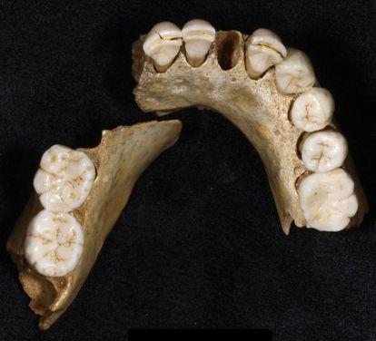 La mandíbula fósil de un adolescente neandertal hallada en Valdegoba (Burgos).