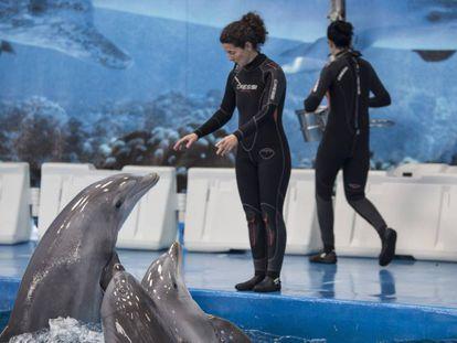 Dos trabajadoras del Zoo de Barcelona dan de comer a los delfines.