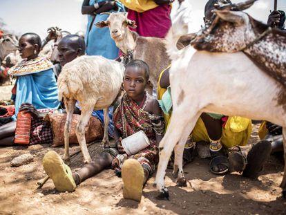 Una comunidad samburu esperando a sacrificar sus cabras en Kenia.