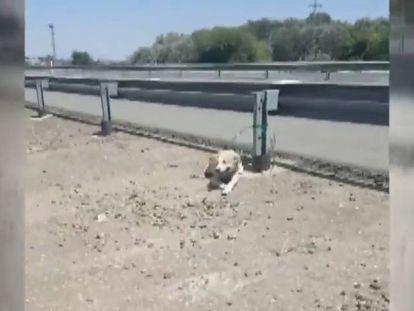 Un perro abandonado, atado a un quitamiedos en Córdoba.