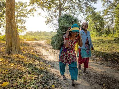Dos mujeres recogen hierba en los límites de la comunidad forestal de Kumore (Nepal).