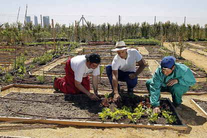 Pablo Prieto, perito agrícola, y dos empleados de la Fundación Carmen Pardo-Valcarce trabajan en los huertos de Montecarmelo.