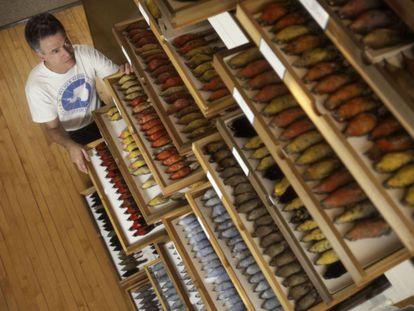 Uno de los autores del estudio, David Willard, muestra parte de los pájaros recogidos.