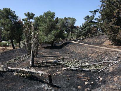 Aspecto tras el incendio de la Dehesa de la Villa.