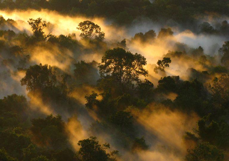 La selva amazónica superó su máxima capacidad de retirar CO2 de la atmósfera en los años 90.
