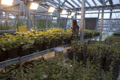 El invernadero de Bioceres en el que se terminan de probar las semillas antes de plantarse en campos piloto.