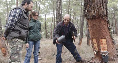 Tres resineros en Tardelcuende, Soria.
