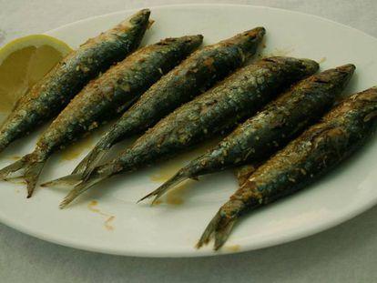 El ICES recomienda no pescar sardinas en 2018.