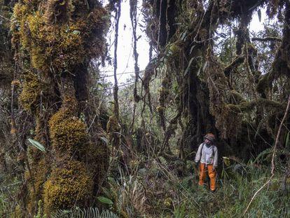 El aventurero que encontró un tesoro en las montañas de Los Andes