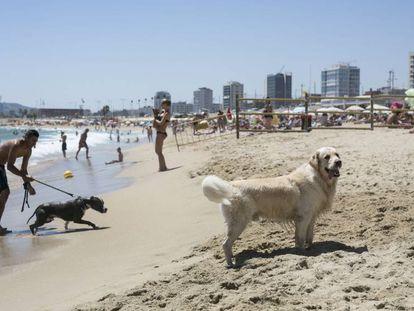 La playa para perros de Barcelona.