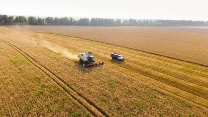 Campos en la época de la recolección del trigo.