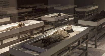 Momias expuestas en el Museo San Miguel de Azapa.