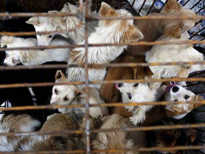 Varios perros en una jaula de un mercado asiático.