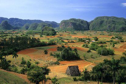 Panorámica del valle de Viñales (a 180 kilómetros de La Habana), patrimonio mundial y donde destacan las elevaciones kársticas llamadas mogotes.