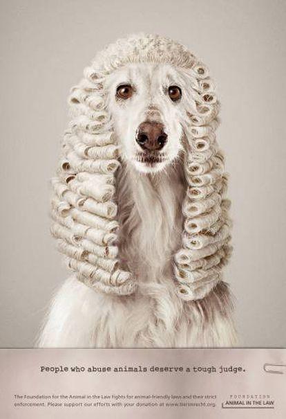 """ONG Foundation Animal in the Law. """"La gente que abusa de los animales merece un juez duro"""". Agencia Ruf Lanz, Suiza."""