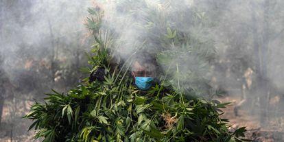 Soldados mexicanos destruyen una plantación de marihuana durante una redada contra un laboratorio de drogas clandestino, en Tecate (México).