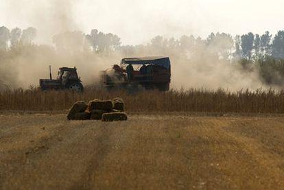 Agricultores trabajando en la recogida de la cosecha de patatas, ayer en la comarca ourensana de A Limia.